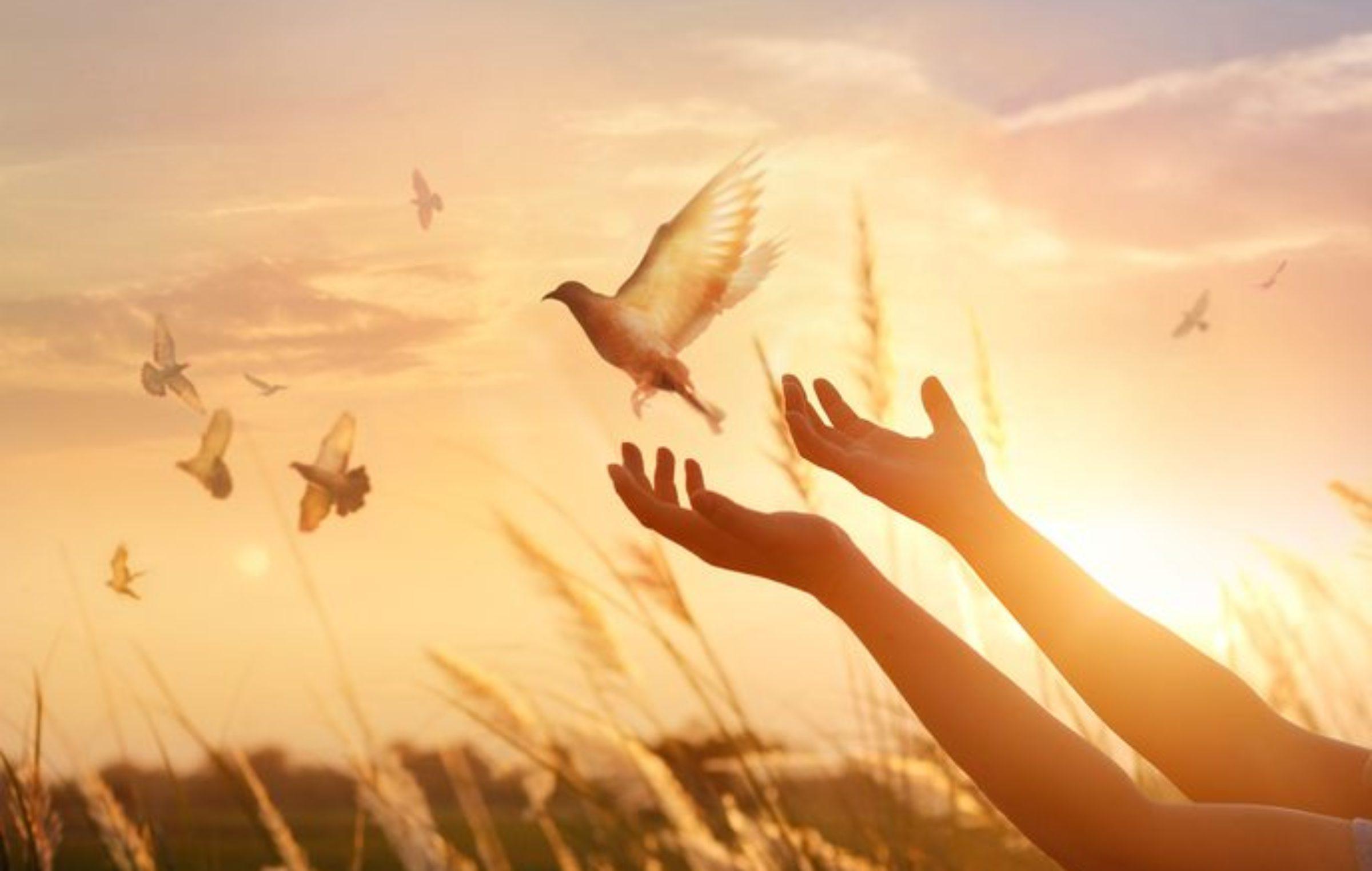 Resultado de imagem para caminho do coração paz
